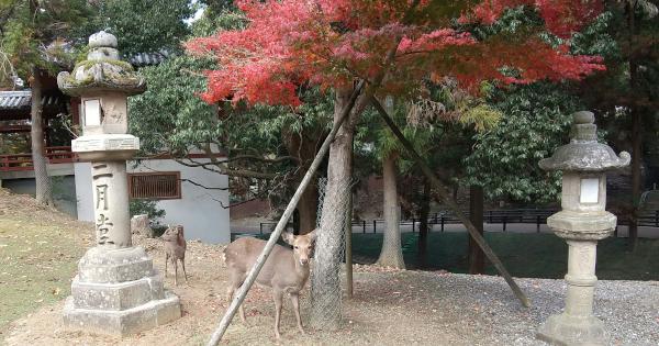 帰途で見かけた、紅葉と鹿
