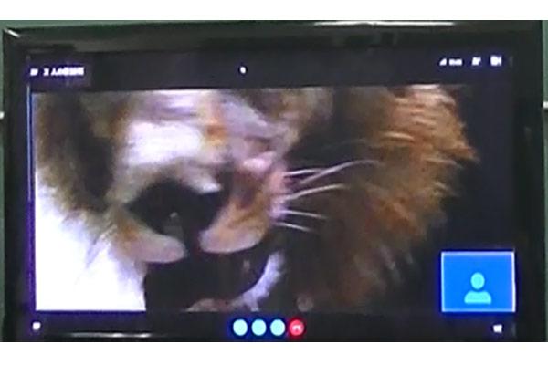 教室では目前に迫るライオンの映像に歓声が上がりました