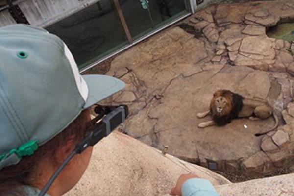 千葉市動物公園が源小学校でDynabook社『インテリジェントビューア』を用いた遠隔授業の実証実験を実施
